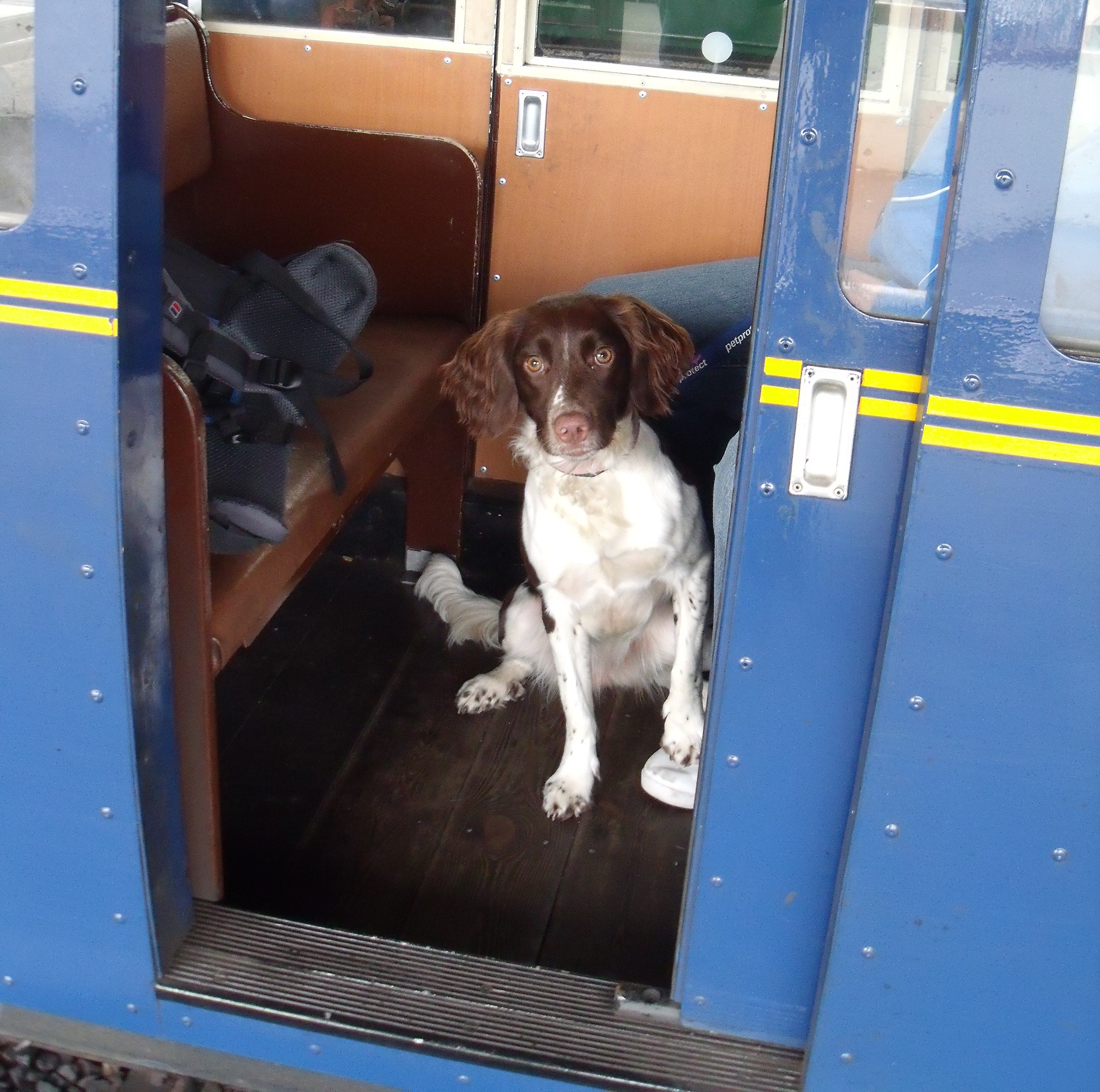 Can Dogs Travel On Trains In Uk