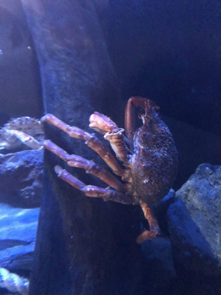 LobsterHatcheryDogs