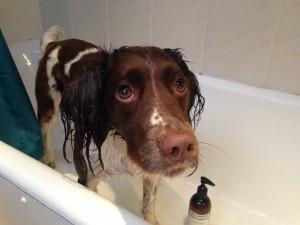 Meg sampling wildwash shampoo
