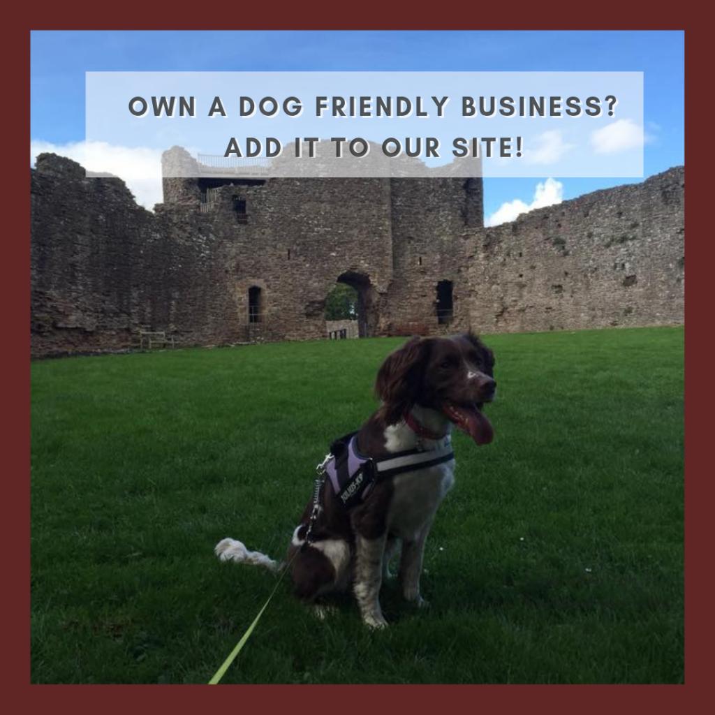 add dog friendly business