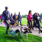 13th June - Big Dog Walk - Sussex